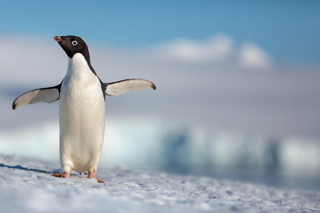 Hug penguin